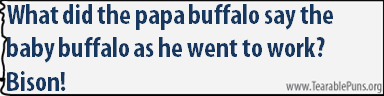 What did the papa buffalo say the baby buffalo as he went to work?