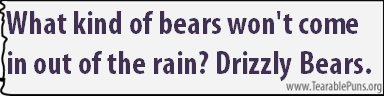 What kind of bears won't come in out of the rain?