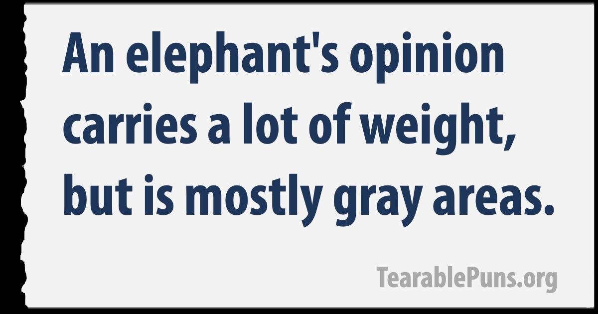 an elephant's opinion